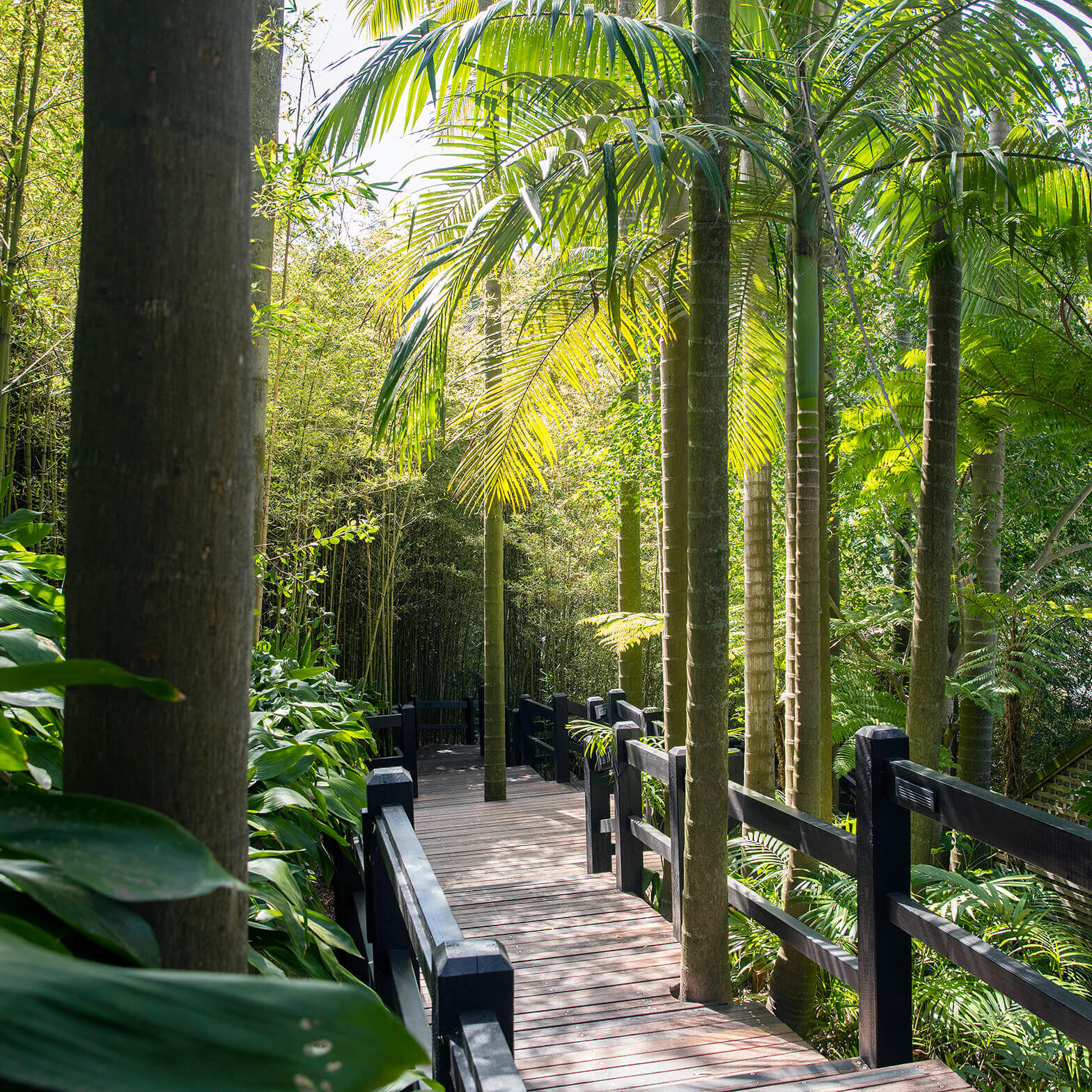 Rainforest Walkway